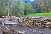 Timber Yard on the edge of a forest — Stock Photo