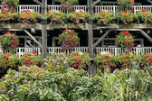 Flowering hanging baskets on old wooden rustic structure — Stock Photo