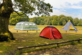 Three big colorful tents in woodlands campground — Stock Photo