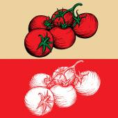 Tomatoes drawing engraving vector - stock image — Stock Vector