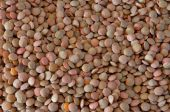 Detail of edible lentils — Stock Photo