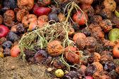 Rotting fruit compost — Stock Photo
