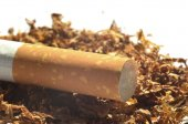Close-up detail of cigarette filter on tobacco — Stock Photo