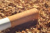Detail of cigarette with filter on tobacco — Stock Photo
