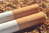 Detail of two cigarette with filter on tobacco — Stock Photo