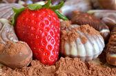 Chocolate candies shaped like seashell and seahorse — Stock Photo