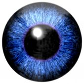 Detail of eye with blue colored iris and black pupil — Stock Photo