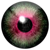Detail of eye with green colored iris and black pupil — Stock Photo