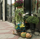 Cart of flower pots — Stock fotografie
