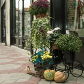 Cart of flower pots — Foto de Stock