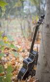 Western acoustic guitar in nature — Stock Photo