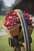 Flowerpots on the cartwheel — Stock Photo