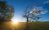 朝の太陽の光。古い木. — ストック写真