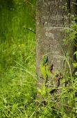 Two green lizards on a tree bark — Stok fotoğraf