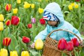Adorable  toddler girl gathering tulips — Stock Photo