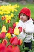 Garota adorável criança reunindo tulipas — Fotografia Stock
