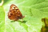Butterfly on green leaf in springtime — Stock Photo