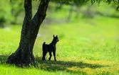 Pequeno cordeiro recém-nascido na primavera perto de uma árvore — Fotografia Stock