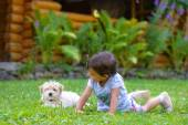 Little girl playing with a little puppy — Stock Photo