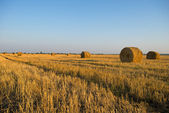 Rural landscape with straw rolls — Stock Photo