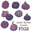 Hand drawn colorful sketchy figs — Stock Vector #78031444