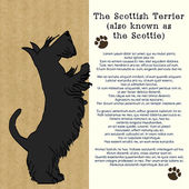 Brochure with sketch of Scottish terrier — Stock Vector
