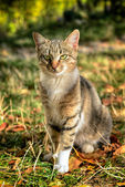 Cat from a shelter from Donetsk — Stock Photo