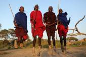 Unidentified jumping Maasai warriors — Stock Photo