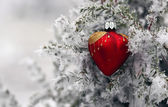 Christmas tree in frost heart — Stockfoto