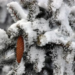 Fir with cones in the snow — Stock Photo #64015319