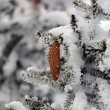Fir with cones in the snow — Stock Photo #64015839