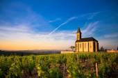 Twilight on vineyard — Stock Photo