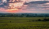 Vineyard of Beaujolais at sunrise time — Stock Photo