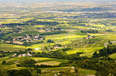 Vineyards of Beaujolais, Rhone, France — Stock Photo