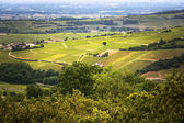 Vineyard of Solutre village, Bourgogne, France — Stock Photo
