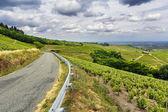 Road of wine, Beaujolais, France — Stock Photo