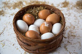 Chicken egg — Stock Photo
