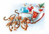 Three tigers and sled in harness — Stock Photo