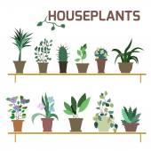 Vector Set of indoor plants in pots. — Stock Vector