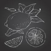 The drawn set of lemons. Lemon segments, juicy lemon. Dark backg — Stock Vector