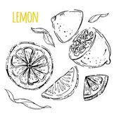 The drawn set of lemons. Lemon segments, juicy lemon. White back — Stock Vector