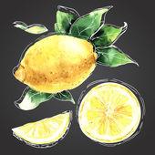 The watercolor drawn set of lemons. Lemon segments, juicy lemon. — Stock Vector