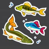 Set of stickers. River fishes — Stock Vector