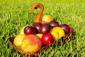 Apples and plums. — Stock Photo