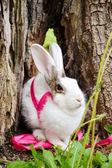 小兔子. — 图库照片