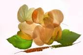 Autumn leaves green yellow nostalgy — Stock Photo