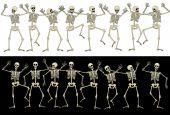 Fun skeletons — Stock Vector