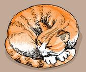 Sleeping red cat — Stockvector