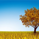 Autumn tree on field — Stock Vector #56961899
