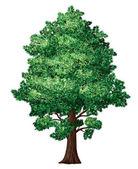 Foliage tree — Stock Vector